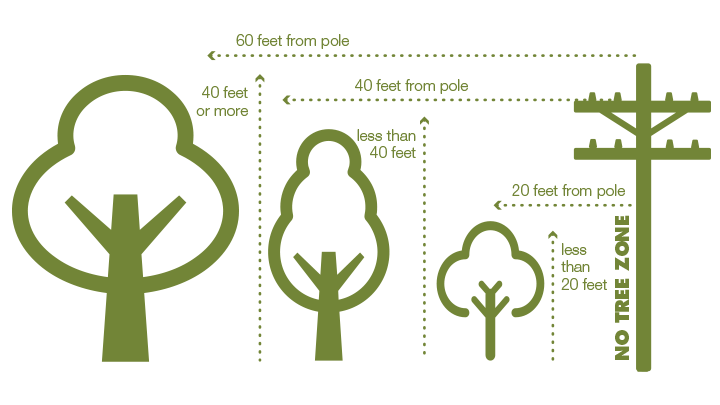 Safe distance to plant trees away from power lines