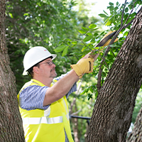 MidAmerican employee trimming the branch of a tree