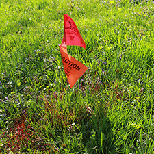 Grass with flags and spray paint indicating below-ground utilities