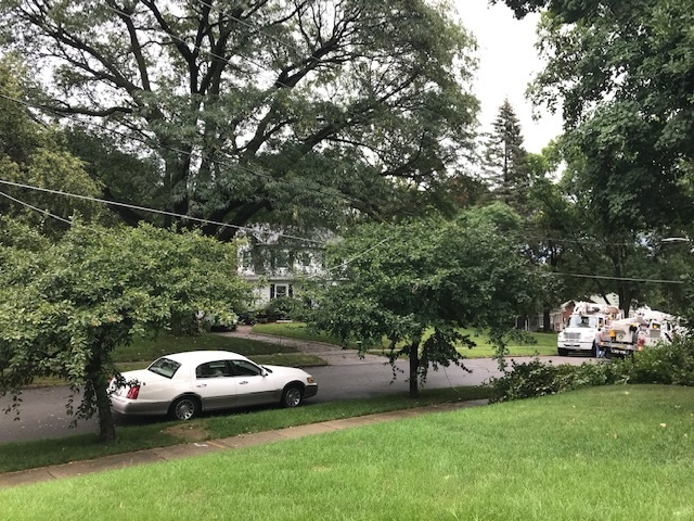Spring storm knocks tree limbs, downed lines